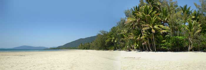 myall  beach at cape tribulation