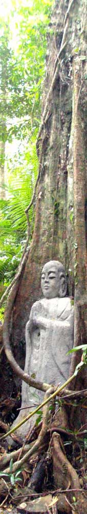 daintree accommodation and sculpture trail at cape tribulation