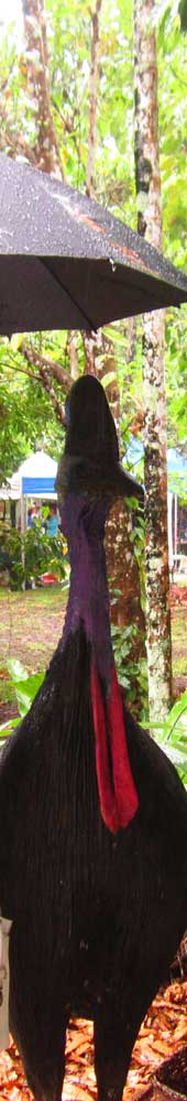 cassowary celebrating world cassowary day