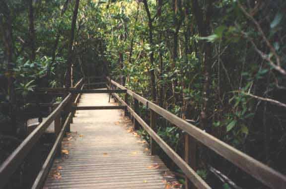 boardwalk at cape tribulation