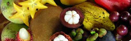 exotic fruit tasting in cape tribulation